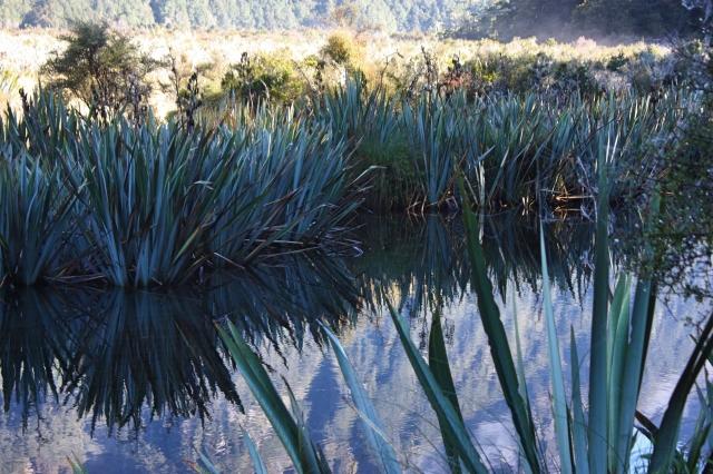 NZ South Island 8