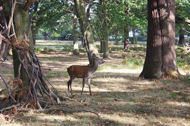 richmond-park-10