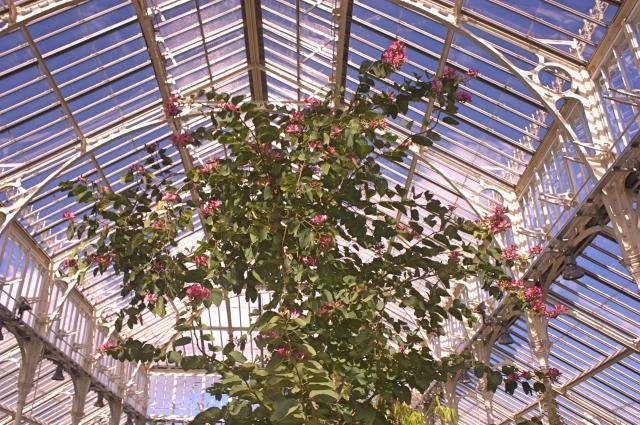 Kew Gardens 11