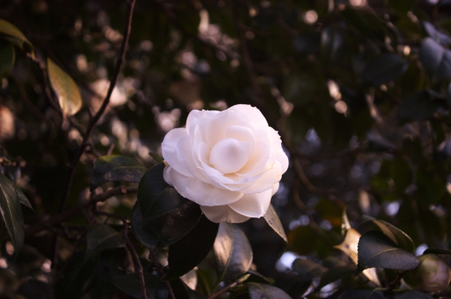 Kew Gardens 17