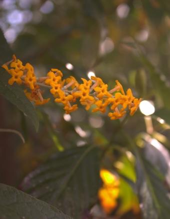 Kew Gardens 9